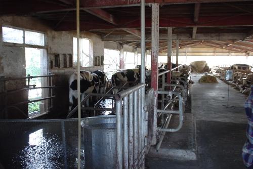 榎本牧場:牛舎