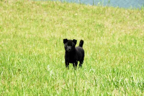 迷い込んだ黒犬