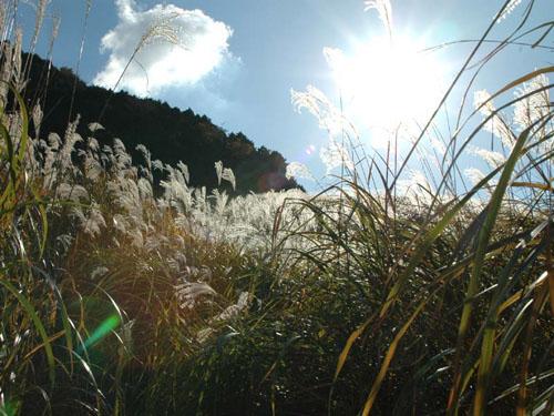 仙石原高原:まだ陽が高い
