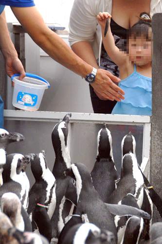 子どもがペンギンに餌をやれる