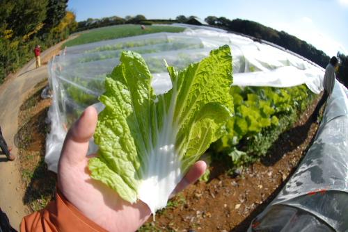 永田農法の野菜