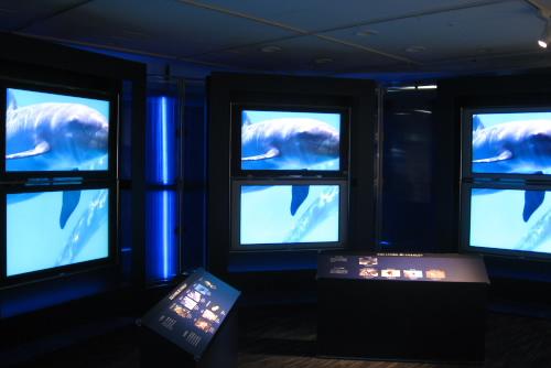 ハイビジョン沖縄美ら海水族館