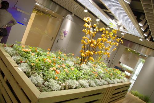 パソナO2は地下の野菜工場