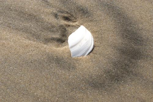 豊間海岸の鳴き砂