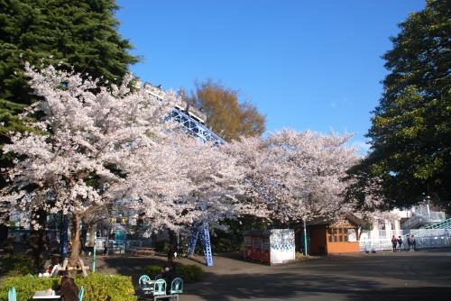 としまえんの夜桜を待ちきれず
