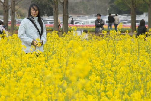 チューリップフェスティバル@あけぼの山農業公園