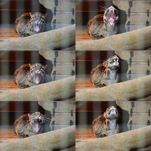 ズーラシアの動物たち
