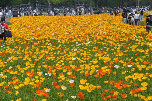 春の無料開放日
