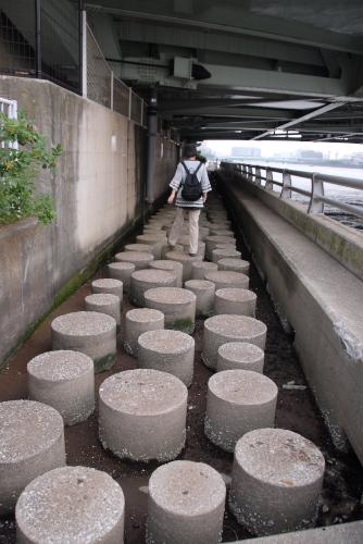 隅田川 橋めぐり