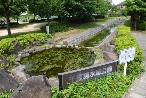 千貫樋水郷公園のキショウブ