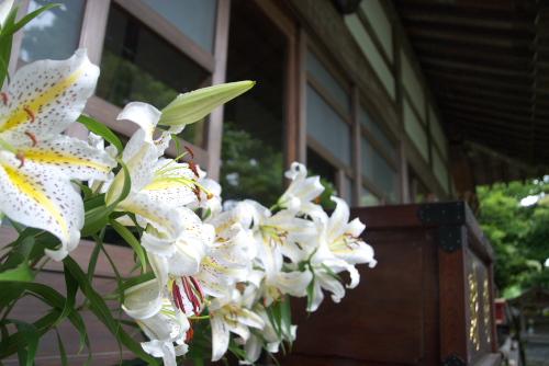 鎌倉アジサイ散歩 成就院