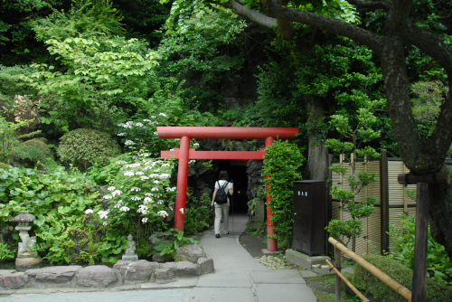 鎌倉アジサイ散歩 長谷寺