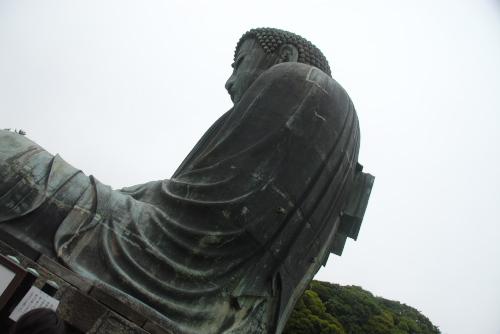 鎌倉アジサイ散歩 鎌倉大仏(高徳院)