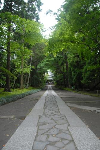 鎌倉アジサイ散歩 寿福寺の参道