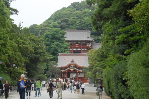 鎌倉アジサイ散歩 鶴岡八幡宮