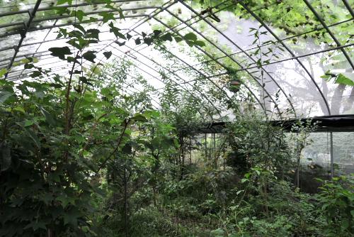 むさしの自然観察園(北町ビオトープ)を見学