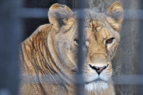 無料の野毛山動物園