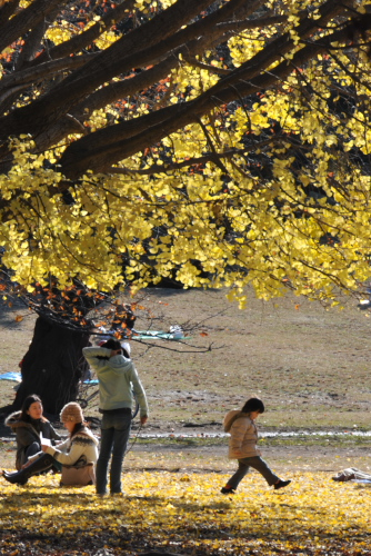 光が丘公園の落葉