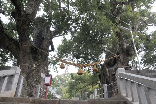 山王神社の被爆クス