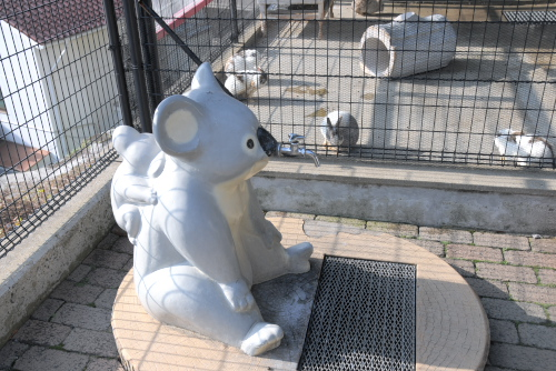 長崎公園(動物広場)