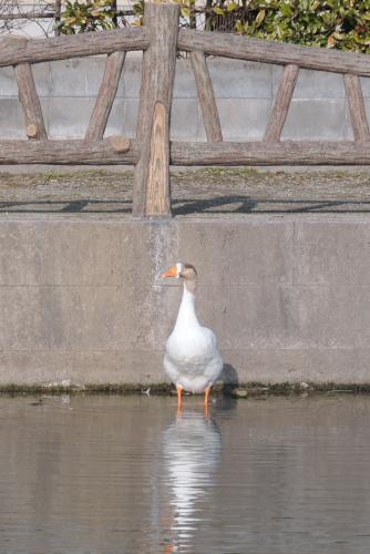 白土湖の鳥