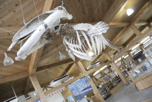 ミンククジラの骨の展示
