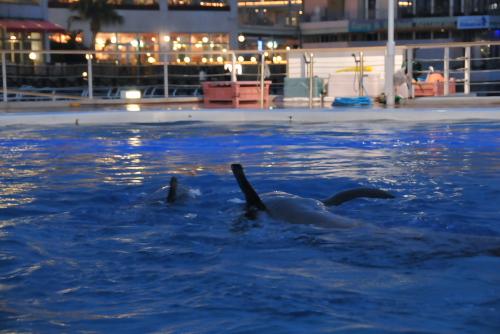 ゆったり泳ぐイルカたち