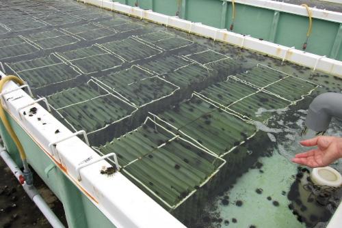 うに栽培漁業センター