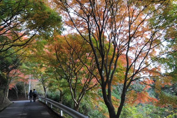 見晴らしの道の紅葉