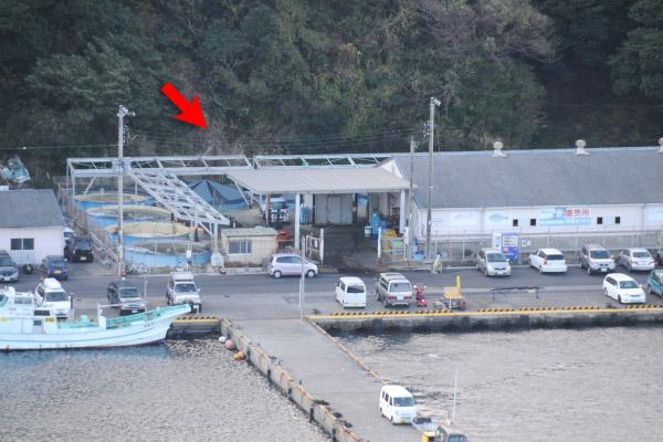勝山漁協 活魚センター
