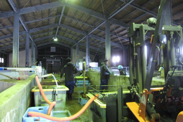 活魚センター:陸上備養施設(直売所)