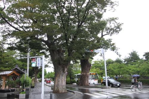 周辺は大木が多い