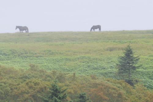 遠くに放牧された馬や牛がいた