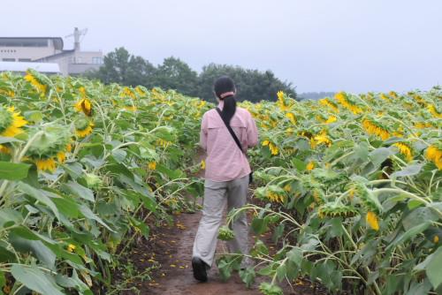 畑の中に入っていけるが、ごちん、ごちんと花にぶつかる<br />