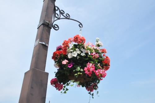 街中に花が飾ってあった