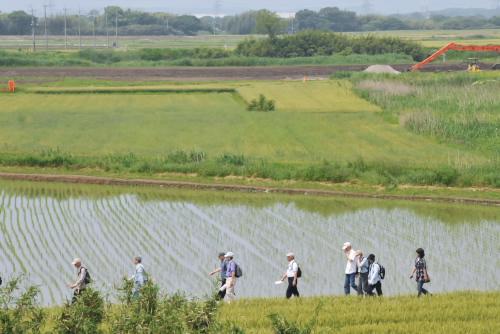 水田を抜けてポピー畑へ