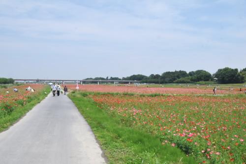 花畑を抜ける道