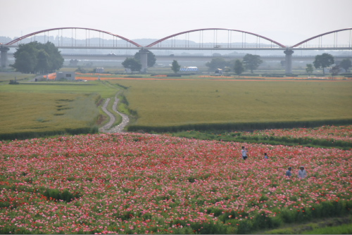水管橋とポピー畑