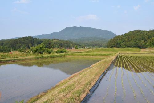 いろんな水田を見させてもらった。奥に見えるのは尾神岳。