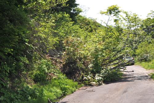 吉川:倒木の先を切り落として通行している