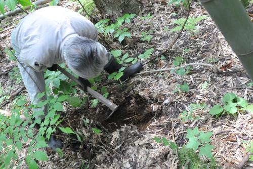 吉川:おじいさんに掘ってもらう
