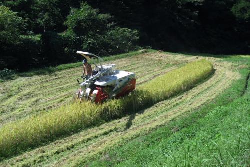 吉川:バリカンのように刈っていく