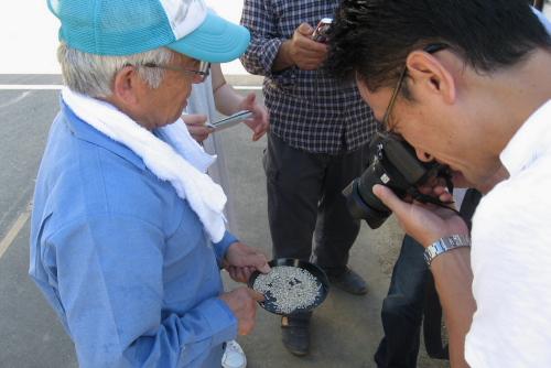 吉川:穀物検査員が玄米を確認して米の等級分けをする