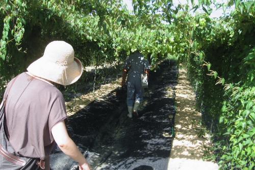吉川:自然薯栽培をはじめた