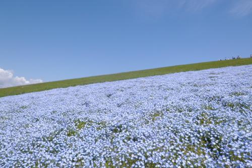 見晴らしの丘