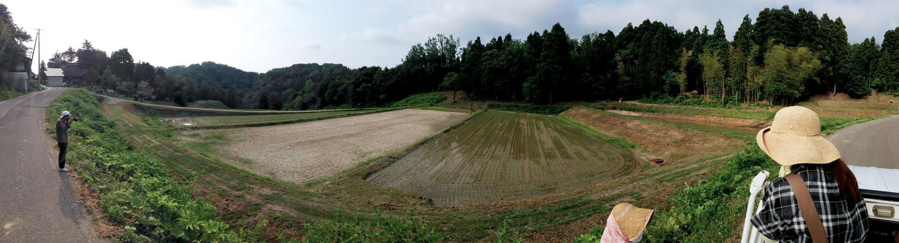 水がなく、あきらめた田んぼ