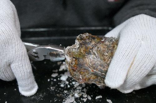 牡蠣の殻むきに挑戦
