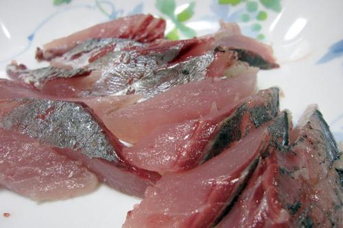 東京湾で釣ったアジとサバ
