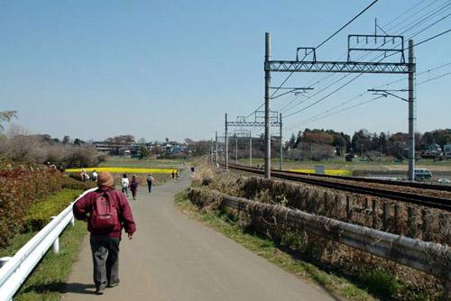 [ウォーキング] 大宮駅開業120周年記念:大宮・氷川神社と盆栽村と自然めぐり