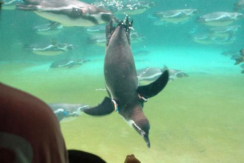 葛西臨海水族園 / 魚のように泳ぐ鳥を見た